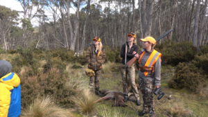 driven wallaby hunt Tasmania
